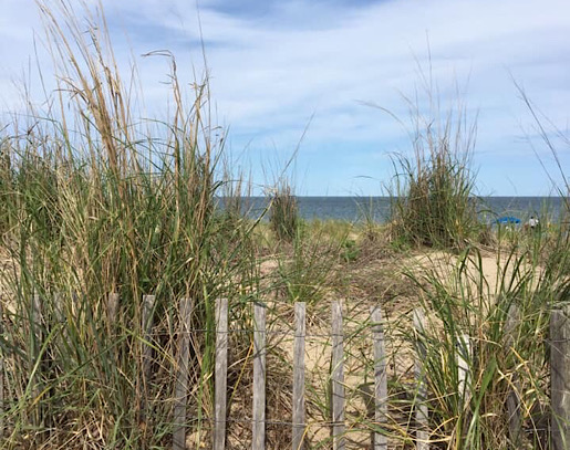 CANCELLED - Beach Camping at Cape Henlopen State Park